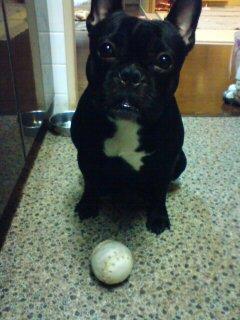 ボール型の…。