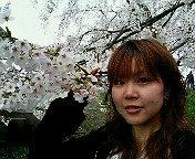角館桜まつり。