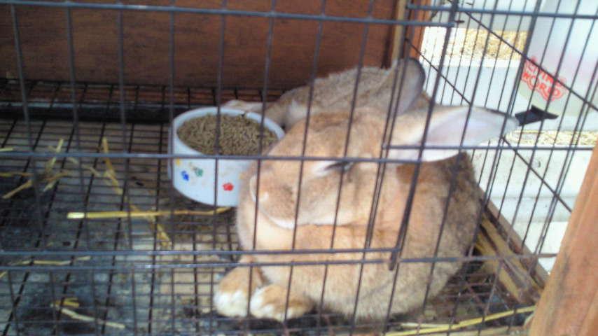 ウサギさん。